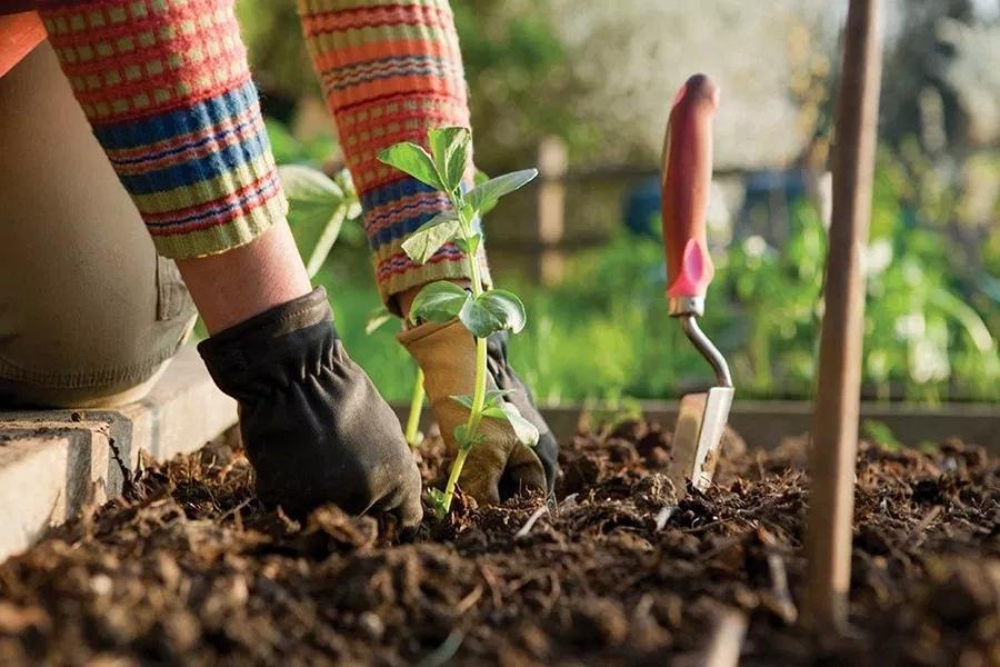 Посевной календарь на март 2019 года огородника и садовода