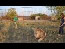Разборки львов Марселя и Виктора Тайган Крым