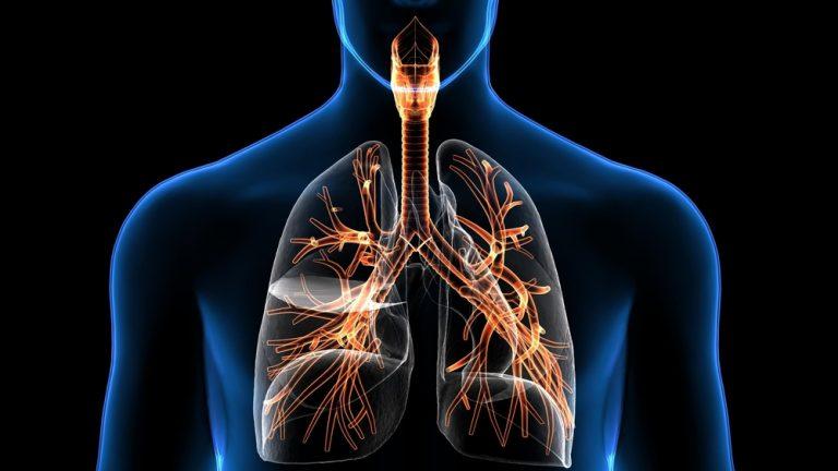 Каковы различные заболевания дыхательной системы?