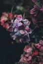 Душа, в отличии от разума, не думает и не рассуждает — она чувствует и знает…