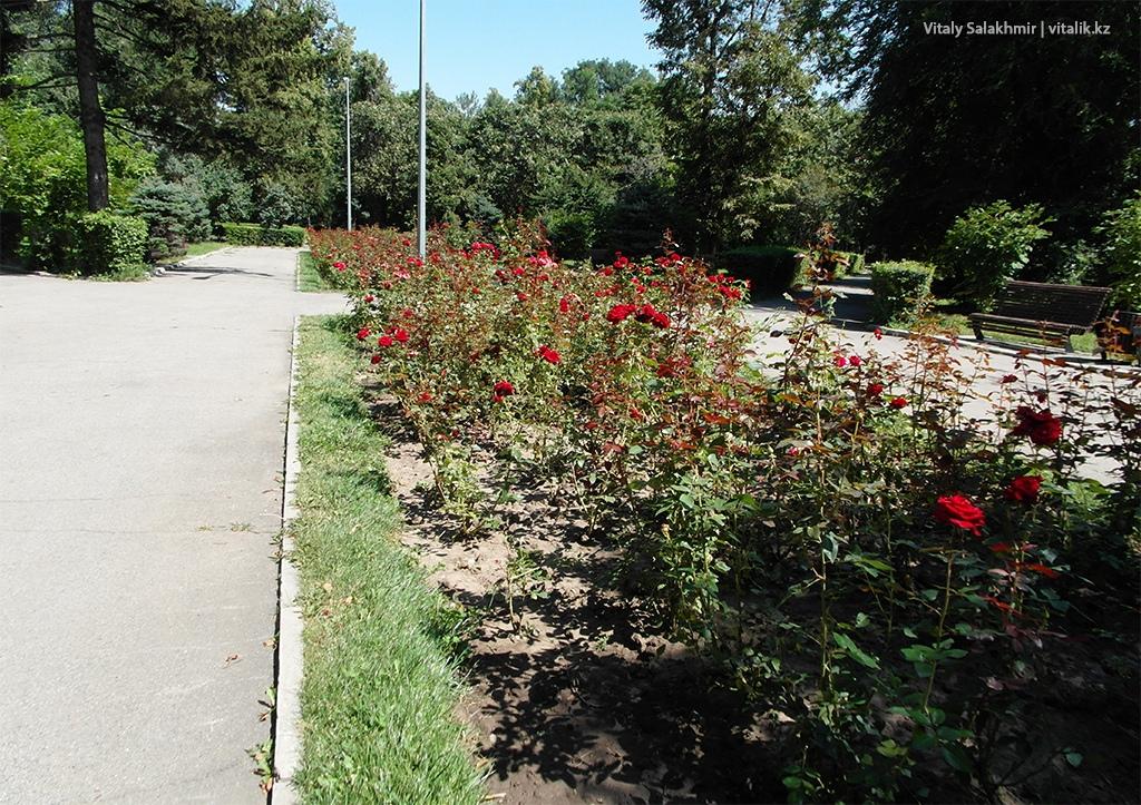 Аллея с розами, Центральный Парк Алматы 2018