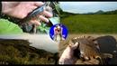 Сахалинский выходной и немного рыбалки.