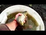 Подготовка пруда к зиме, искусственный водоём для разведения, выращивание рыбы, раков!