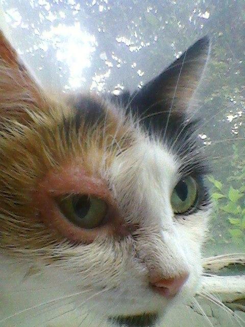 Кот раздирает глаза
