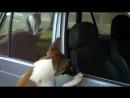 [v- охраняет машину. Собаке сильно не повезло. (The cat guarding the car)