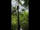 Zanzibar/Jambo Bwana/Hakuna Matata