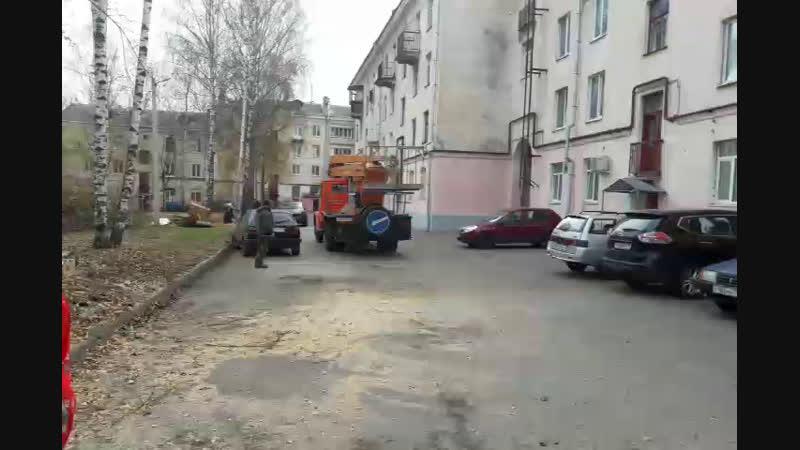 Жители ул. Горького взбунтовались против спила деревьев