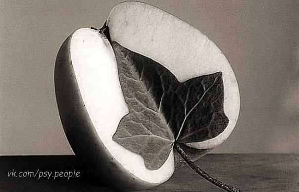 Философ подбросил на ладони яблоко, повертел, разглядывая с разных сторон, и глубокомысленно произнес: – Люди считают, что их души подобны яблокам. – В смысле? – заинтересовался его ученик. – Точнее, половинкам, – поправился философ. – Вот так примерно. Он аккуратно разрезал яблоко на две части и положил на стол. – У них есть такое поверие, будто для каждого человека существует идеальная пара. Вроде бы Бог, прежде чем посылать души в мир, рассекает их пополам, на мужскую и женскую половинки.…