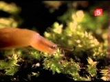 BBC Мир природы. Таинственный сад