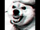Чернобыльский Пес