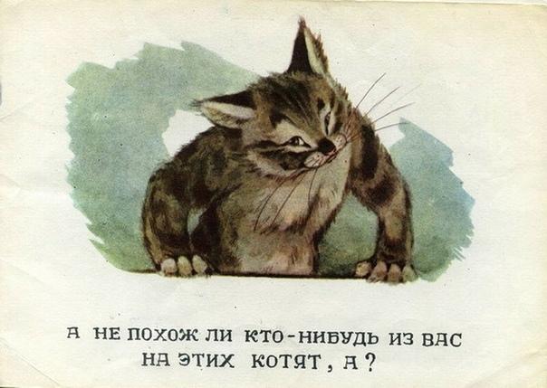 Советские назидательные картинки «Посмотрите, какие котята»