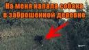 Нападение собаки Жуткая хижина в лесу Заброшенная деревня