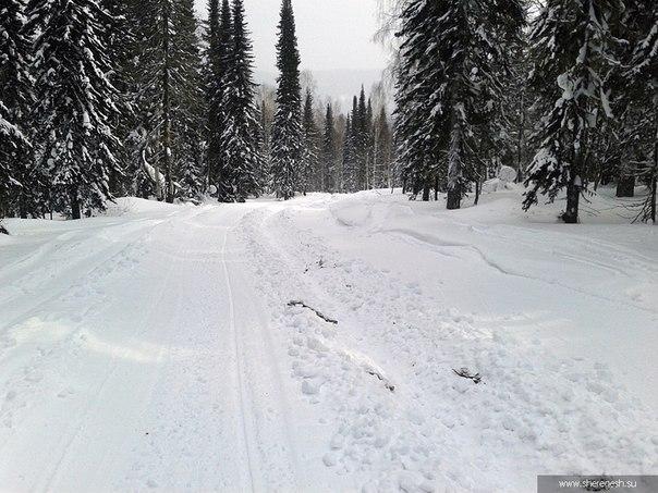 В Шерегеше лесорубы испортили лыжню для беговых лыж