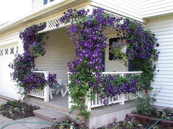 Садовые цветы и растения. Eug8GytD-2Q