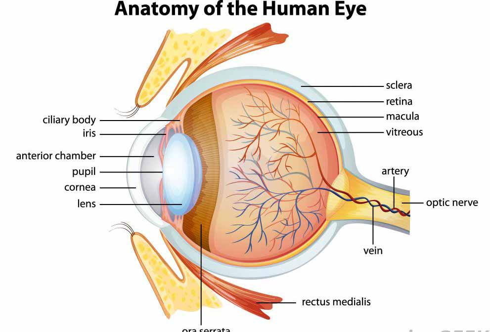 Глаукома заставляет человека постепенно терять зрение.