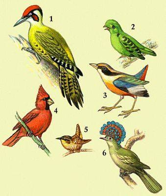 Все птицы мира updated the community photo