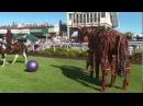 War Horse Puppet meets The Horse Whisper at Sandown Park