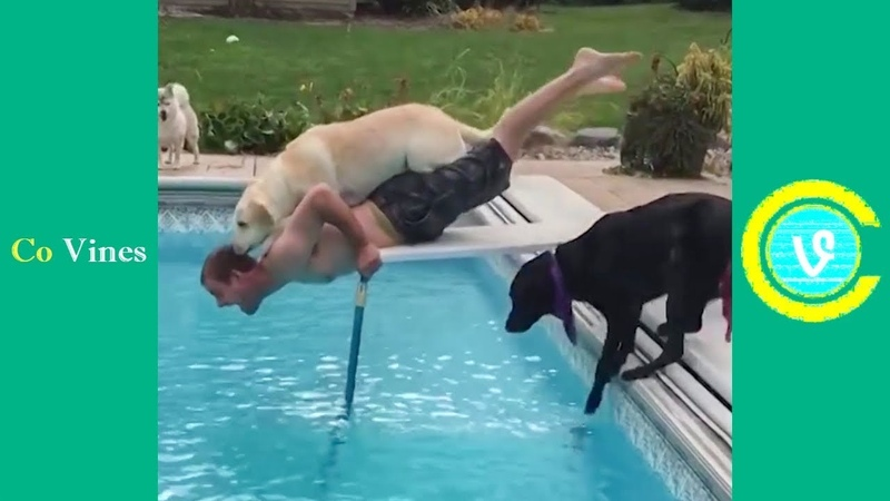 Try Not To Laugh Watching Funny Animal Fails Compilation November 2018 1 - Co Vines✔