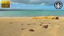 Расслабляющая Музыка Под Шум Карибского Моря и Звуки Волн. 10 Часов Для Глубокого Сна и Релакса