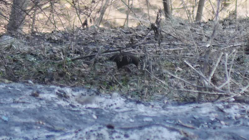 Щеглы дрозды сорока в гнезде и другие охтинские обитатели