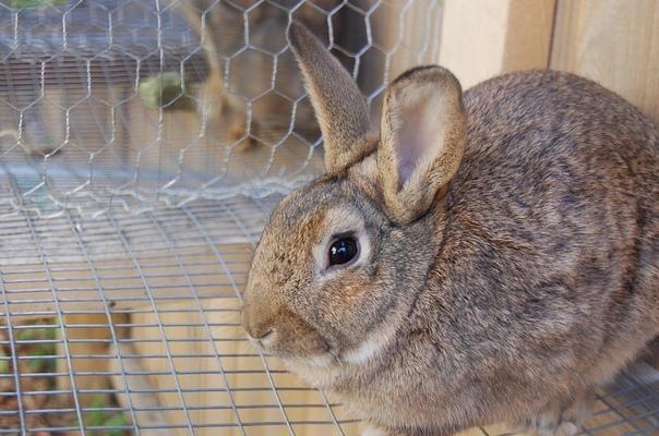 Какие клетки выбрать для кроликов