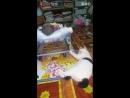 Кошка - нянька