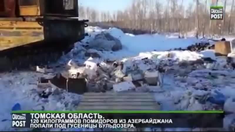 Дави ..ять, дави их всех ..ять!! 120 кг азербанджанских помидор оказались под бульдозером