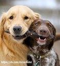 Собачник, приходя на новую площадку, сразу делит всех присутствующих псинок на три категории…