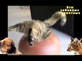 Кот залез в кувшин Cat climbed into the jug