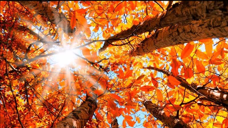 ,,Осенний сон Летнего сада,,