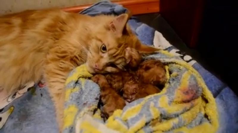 New-born-and-mama.mp4