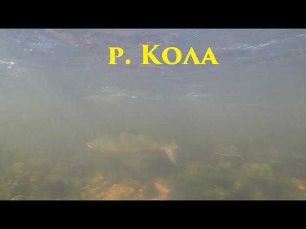 Сёмга в р.Кола / Salmon in the Kola river