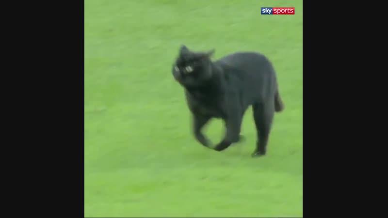 Кот прервал матч Английской премьер-лиги и сорвал овации болельщиков