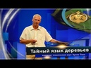 Доклад Эрвина Тома Тайный язык деревьев www kla tv