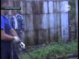 Видео чудесного спасения коровы из Биробиджана