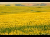 Sarah Jane Morris - Fields Of Wheat