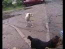 001_ГРОШ АБРАМ АРСЕН и собаки гроша и ПРОРОК САН БОЙ 2014