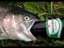 Десятилетний вискарь и пиво под копченую рыбку