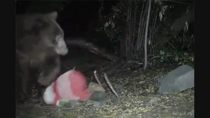 Санта забрел в русский лес