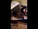 Кот ржач смотреть