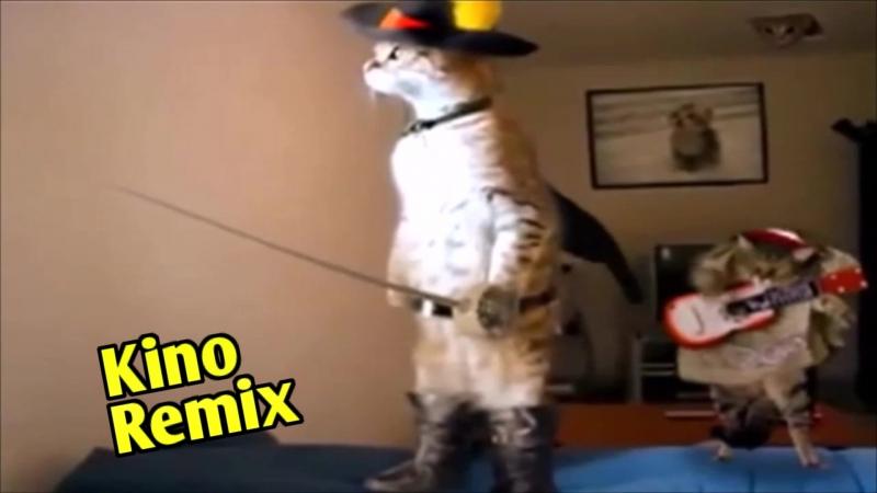 фильм Матадор kino remix 2018 угар ржака до слез смешные коты музыканты приколы с животными пушистый ансамбль