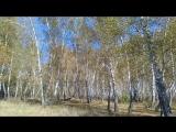 Прогулка по осеннему лесу...