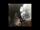 Обработка квартиры от запаха мёртвой кошки
