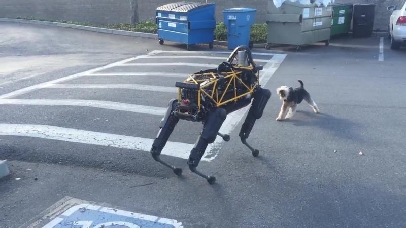 Пес против собаки робота. Восстание машин.