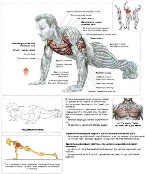 Январь 18th, 2013. . Упражнение прорабатывает трицепсы, плечи, грудь, прес