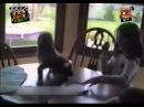 Смішні приколи про тварин Вусо-лапо-хвіст 12
