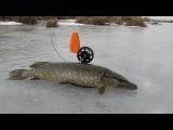 Ловля щуки на жерлицы под конец зимы часть 1 (видео отчет 2015)