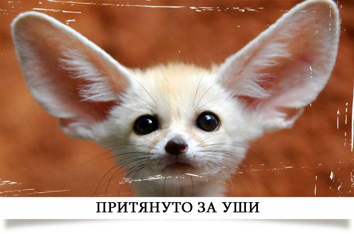 http://cs315731.vk.me/v315731512/99b3/VvTzvdm8nXg.jpg