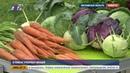 В поиске отборных овощей