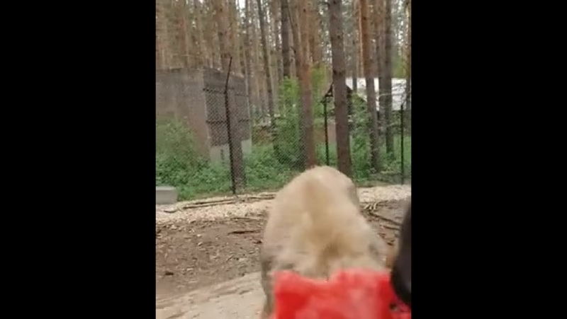 Придет серенький волчок и укусит за арбуз 😀 языковойцентрарбуз английскийбарнаул